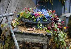 Syksy puutarhassa - katso ihanat kuvat ja inspiroidu! | Kotivinkki