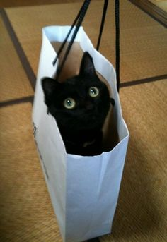cats favourites: paper bags