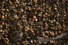 Otaries sur un rocher près de Duiker Island, province du Cap en république d'Afrique du Sud