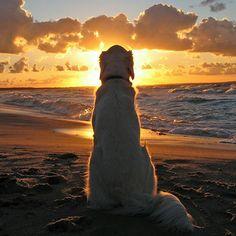 QUIZ: 20 DOG TRIVIA QUESTIONS