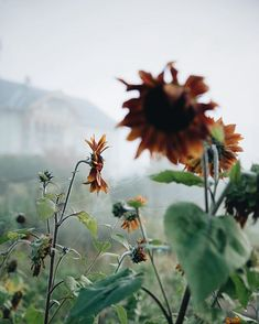 While waiting for the sun to break. (on repeat, I know. Autumn Day, Autumn Trees, Autumn Leaves, Pretty Flowers, Wild Flowers, Anne Of The Island, Farm Lifestyle, On Repeat, Autumn Garden