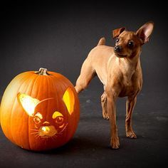 Chi pumpkin stencil