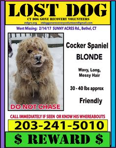 CT Dog Gone Recovery Volunteer Network Published by Sharon Boulanger · 15 hrs ·  Please share. This precious boy went missing on 2/14/17 from Sunny Acres Rd, Bethel, CT. He is a blonde Cocker Spaniel, with long wavy/messy hair, about 30-40 lbs, he is friendly and very high energy.