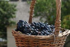 Новороссийск берет курс на винный туризм и поддержку производителей