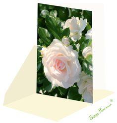 Diese Rosenkarte ist ohne Text und eignet sich hervorragend als Hochzeitskarte, Glückwunschkarte, Geburtstagskarte oder Genesungskarte. Auch als Verlobungskarte ist sie geeignet. Flowers, Plants, White Roses, Card Wedding, Communion, Birth, Florals, Planters, Flower