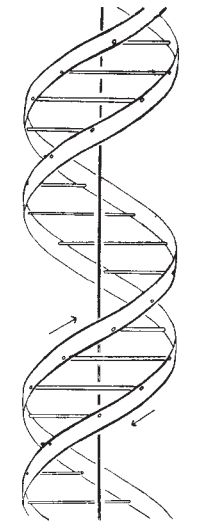 Watson and Crick, DNA