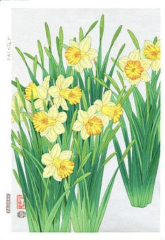 76 Best China Painting Daffodil Narcissus Images