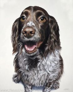 3 Basic Puppies Training Modules To Be Done At Home The wonderfully spirited Molly is finished! I had such fun creating her portrait. You can't help but smile when you look. Custom Dog Portraits, Pet Portraits, English Springer Spaniel, Your Dog, How To Draw Hands, Puppies, Gallery, Drawings, Dogs