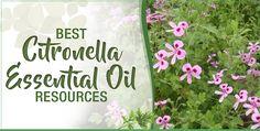 Best Citronella Essential Oil Resources | Essential Oils