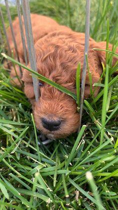 Funny Animal Videos, Cute Funny Animals, Cute Baby Animals, Wild Animals, Videos Funny, Baby Puppies, Baby Dogs, Cute Puppies, Cute Dogs