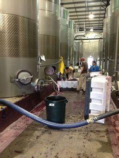 From Columbia Winery   2013 Washington Wine Harvest