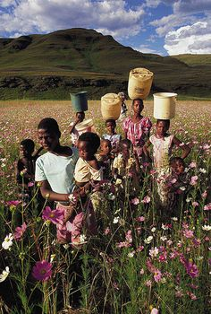 Zulu Children - with cosmos, in the Drakensberg, South Africa