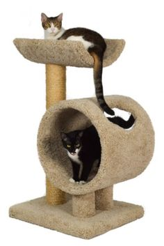 Wood cat furniture of high quality for large cats - Hunde und Katzen Cool Cats, Cool Cat Trees, Big House Cats, Cat Activity, Cat Scratching Post, Cat Condo, Outdoor Cats, Cat Behavior, Cat Furniture