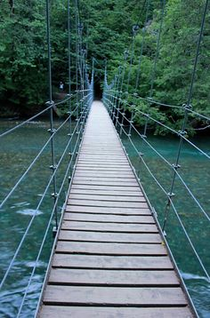 Grove of the Patriarch's trail. 1 mile hike on Mt Rainier. Suspension bridge and stage in the middle  of the woods.