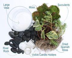 terrarium how-to