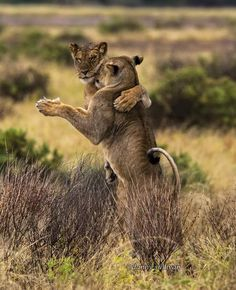 Dance with me. Photo by Danny Sullivan -- National Geographic Your Shot