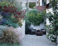 small city walled garden, gravel courtyard, mix of Mediterranean plants, making the most of a small space