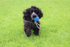 Petface Toyz Rope Ball Review