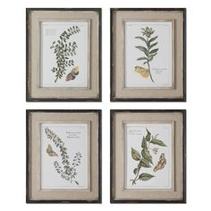Uttermost Butterfly Plants by Grace Feyock 4 Piece Framed Painting Print Set