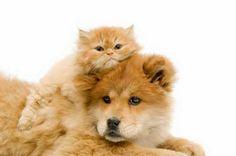 aromaterapia para cães,pet,gatos,animais de estimação,tratamento natural para cães,aromaterapet