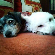 Bellísimas, Benitta y Luna♥♥