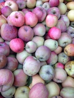 Apples at Portland Nursery.