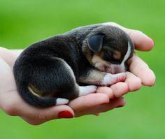 cute little puppy ❤