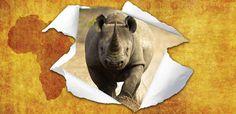 YWP Welcomes Endangered Rhinos