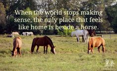 Horses make sense Inspirational Horse Quotes, Equestrian Quotes, Equestrian Style, Classic Equine, Riding Quotes, Country Girl Quotes, Country Sayings, All About Horses, Horses And Dogs