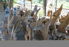 kursi akar, kursi akar jati mahoni, set kursi akar, kursi akar jepara, akar-akar kayu jati mahoni, teak, wood , teak chair, kursi antik, kursi unik,unique chair, antique chair
