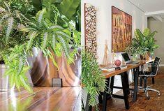 Mesmo quando a luminosidade é escassa, ainda assim dá para ter plantas na sala, na cozinha e no escritório. O espaço pode ser adaptado à chegada de alguns vasos ou até mesmo de um canteiro. Mostramos três soluções e as dez espécies que têm sinal verde para habitar a sua casa