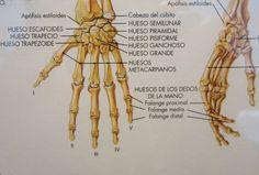 El esqueleto humano (fragmento de la mano) 1995-2003  Col. Patrimoni del Cercle artístic Sant Lluc  Exposició: El Traç (Arts Santa Mònica)
