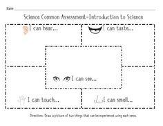 Five Senses Assessment