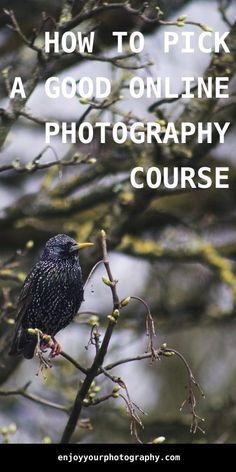 How To Pick A Good Online Photography Course - Enjoy Your Photography