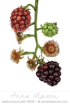 My painting has been selected to appear in the 'Nature's Bounty' exhibition at Kew Gardens!