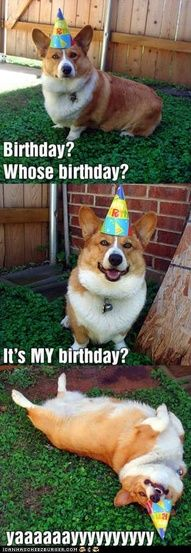 HAPPY BIRTHDAY TO ME! Yeah, it's my birthday i'm going to roll around like this beauty of a corgi :P