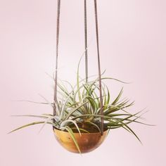 Copper airplants... What's not to love?!