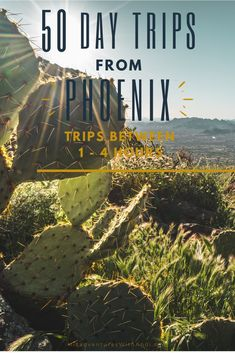 Looking for a day trip from Phoenix that is between 1 to 4 hours away? Phoenix is the perfect central hub for a long list of Arizona day trips and I've got more than 50 of them for you to choose from! Visiting Arizona and take a day trips from Phoenix. This list of the best climbing, hiking day trips from Phoenix has something for everyone. Arizona Day Trips, Arizona Travel, Travel Usa, Travel Tips, Travel Destinations, Cheap City Breaks, Beautiful Places To Visit, Cool Places To Visit, Day Hike