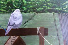 """""""Lunchtuin en de duif"""" een duif dat bij mijn grootmoeder in de tuin regelmatig komt eten."""