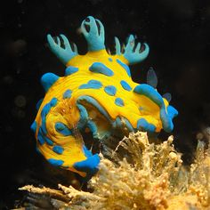 nudibranch at DuckDuckGo Underwater Creatures, Underwater Life, Ocean Creatures, Under The Ocean, Sea And Ocean, Beautiful Sea Creatures, Beneath The Sea, Sea Snail, Sea Slug