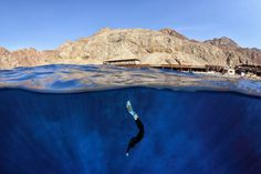Humans are naturally amphibious and uniquely adapted for diving. Here, a freediver dives into the world renowned Blue Hole in Dahab, Egypt.