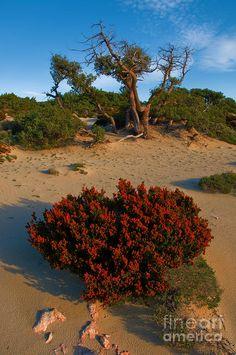 ✮ Desert Landscape - Elafonisos, Greece