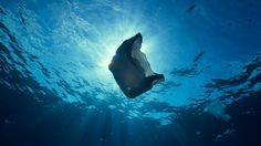 Michael Gove 'haunted' by plastic pollution seen in Blue Planet II Marine Conservation Society, Shark Conservation, Blue Planet Ii, Basking Shark, Marine Reserves, Sea Birds, Ocean Life, Courses, Marine Life