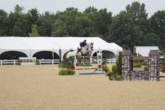 Southern Belle Equestrian // Horse Tails: Interning for NAJYRC + 2015 Saturday Coverage // Rider: Katie Cox