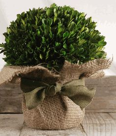 Preserved Boxwood Arrangement 10in high by 8in wide. Also available in 8in high. $34 - mantle decor idea.