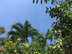 4/20(木)バリ島ウブドの現在のお天気は晴れ。室内温度29.6℃、湿度65%。昨夜は久々にまとまった雨が降りました~。そんな次の日は空気がさわやかで、風も心地よい感じで~す♪