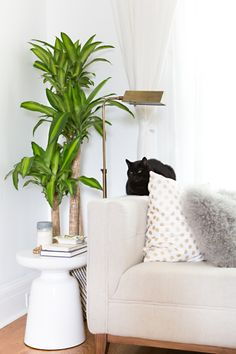 Complete with a cat: http://www.stylemepretty.com/collection/2121/
