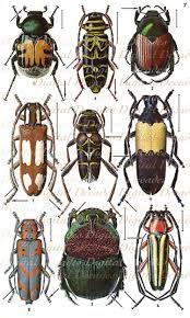 Resultado de imagen de beetles