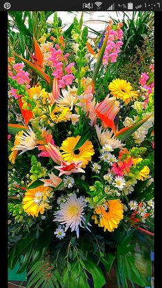 Very Beautiful Flowers, Beautiful Flower Arrangements, Amazing Flowers, Beautiful Gardens, Flowers Gif, Bulb Flowers, Pretty Flowers, Exotic Plants, Exotic Flowers
