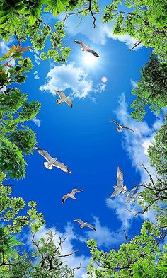 Beautiful Birds Soaring in the Sky Beautiful Birds, Beautiful World, Beautiful Images, Beautiful Landscape Wallpaper, Beautiful Landscapes, Nature Pictures, Cool Pictures, Photo Backgrounds, Belle Photo